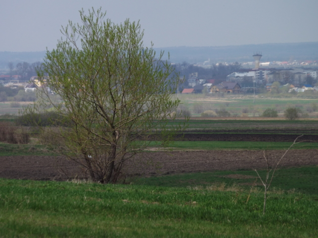 Muguri de Bucovina: ogoare, Rădăuți în zare