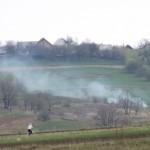Muguri de Bucovina: verde afumat