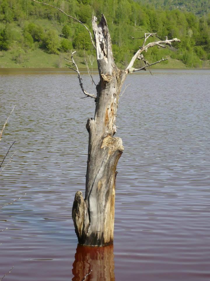 Acesta a fost un copac mândru în satul Geamăna